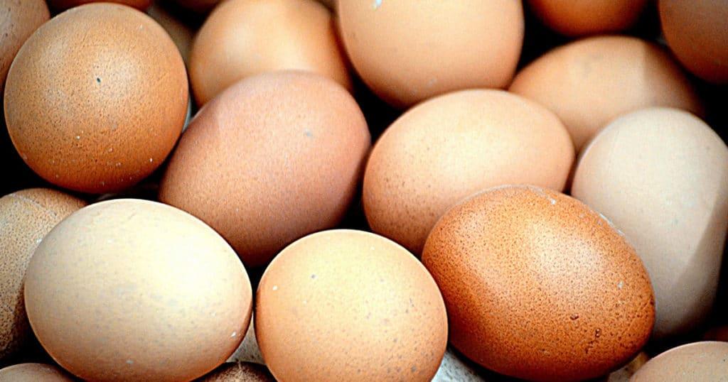 oeufs poule 1024x538 - Alerte : mes poules cassent leurs oeufs