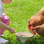 8 bonnes raisons d'avoir des poules