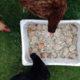 ex repas poule 1 80x80 - Combien de temps peut-on garder les oeufs ?