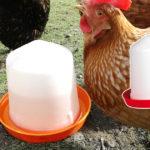 Abreuvoir à siphon pour les poules