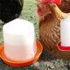 abreuvoir siphon 80x80 - Alerte : mes poules cassent leurs oeufs