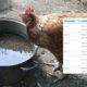 autonomie eau poule 80x80 - Combien une poule boit-elle d'eau par jour ?