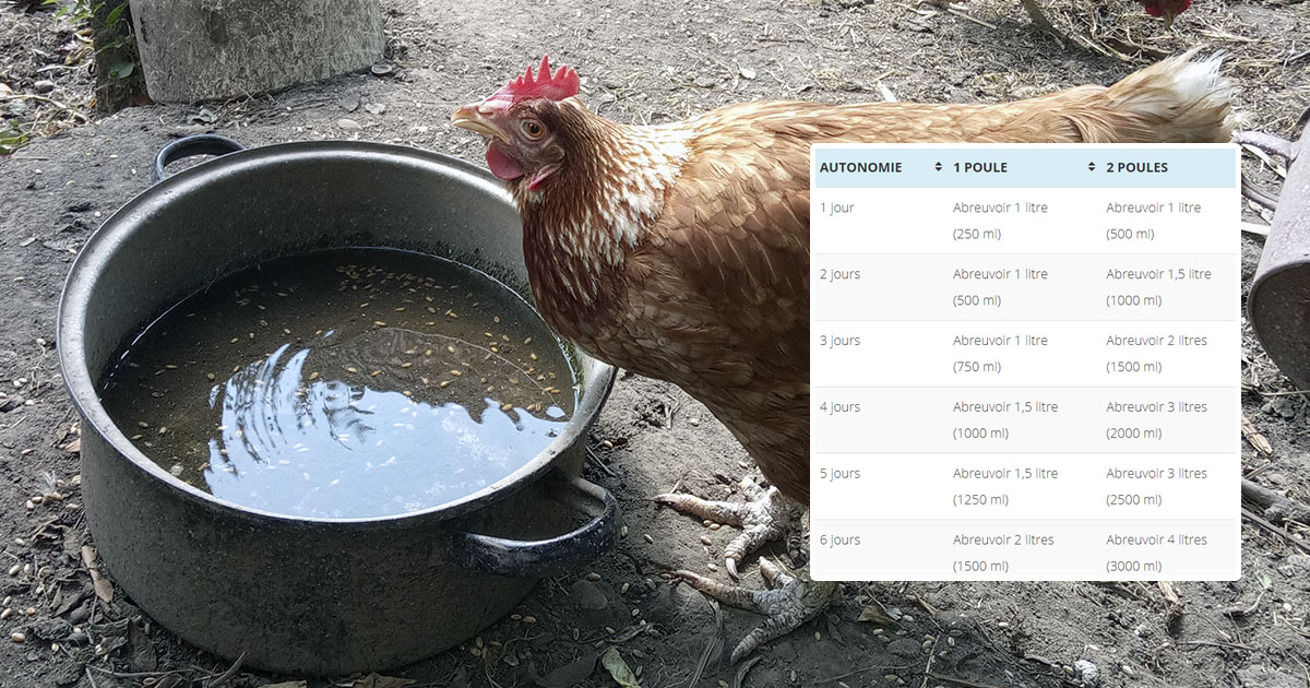autonomie eau poule - Acheter de l'huile de cade vraie