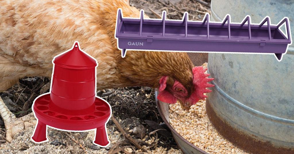 mangeoire poule 1024x538 - La mue des poules