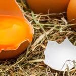 Alerte : mes poules cassent leurs oeufs