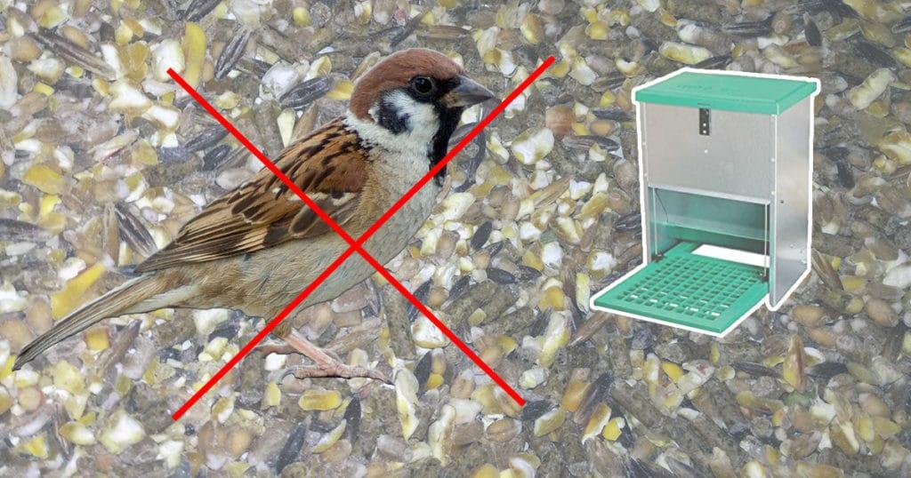 mangeoire anti oiseaux