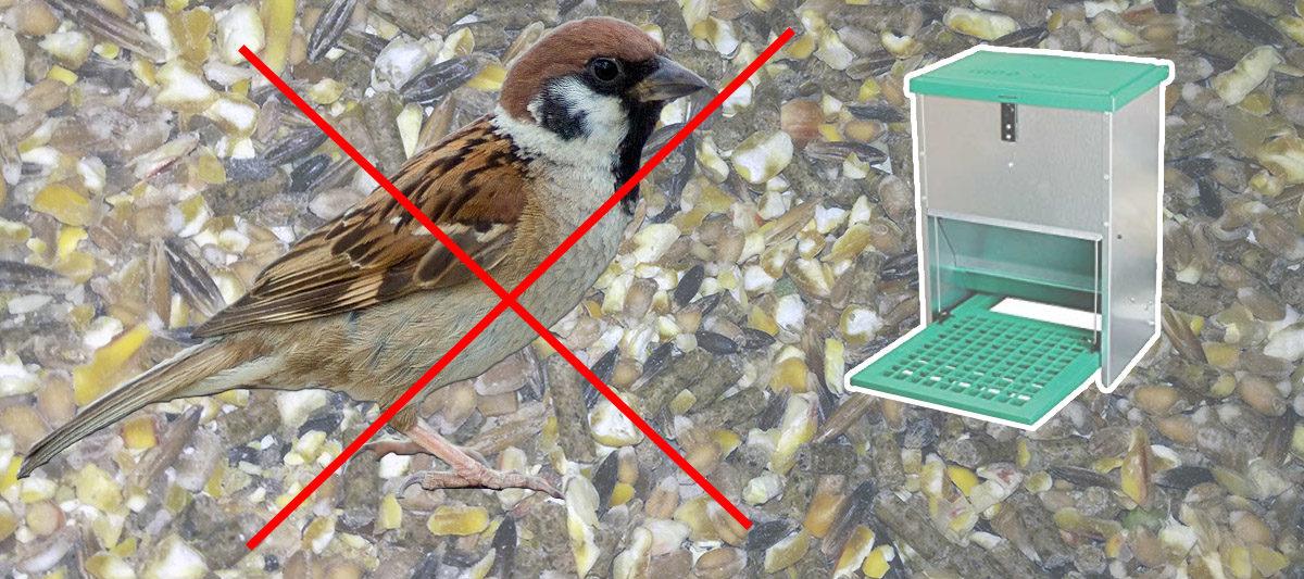 oiseau mangeoire poule 1200x533 - Mangeoire à poule anti-oiseau