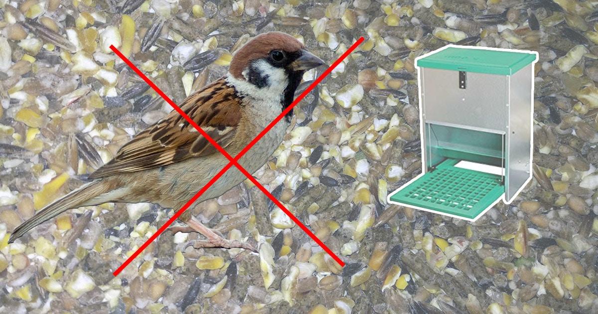 oiseau mangeoire poule - Mini poulailler pour une poule