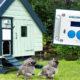 porte chickenguard 80x80 - Mangeoire à poule anti-oiseau