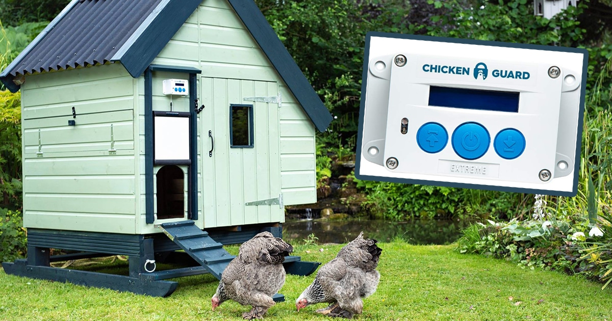 porte chickenguard - Mangeoire à poule anti-oiseau