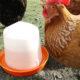 poule boire 80x80 - Les mangeoires d'extérieur