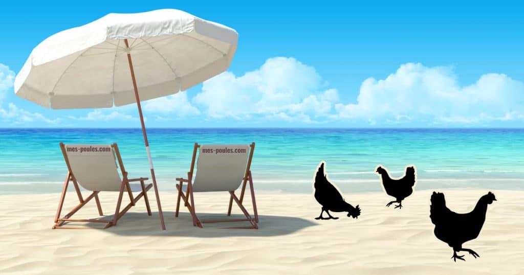 poule en vacances
