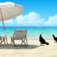 poule en vacances 80x80 - Déplumage des poules : le picage