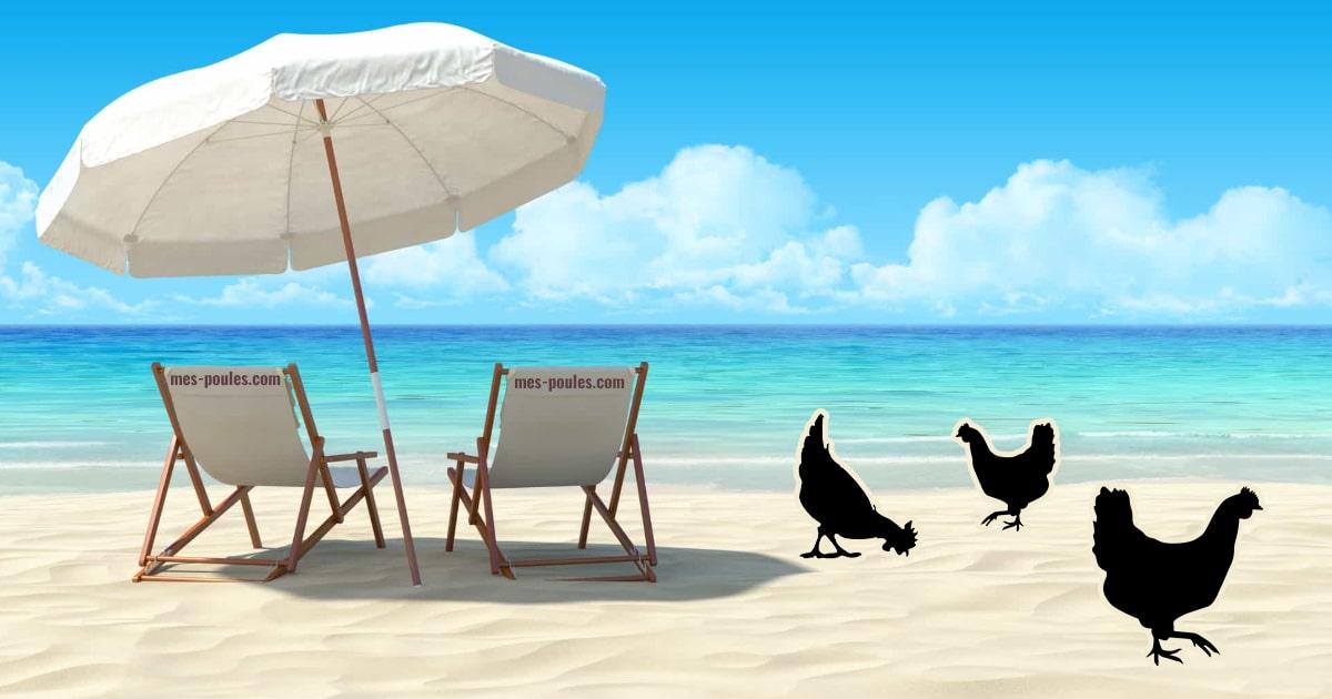 poule en vacances - Vacances : que faire de mes poules ?