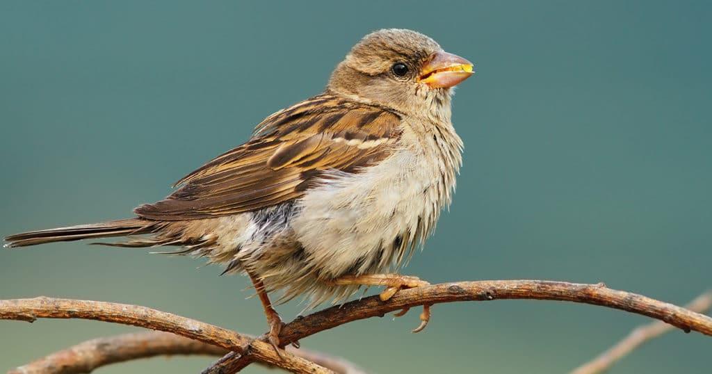 eloigner oiseau