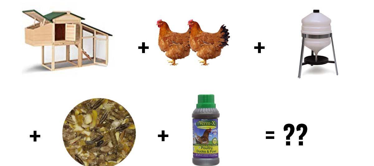 prix poules 1200x533 - Budget poules : combien ça coûte ?