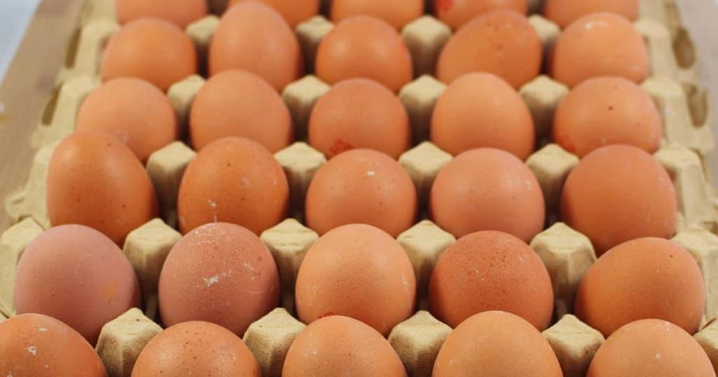 des oeufs 1024x538 - La mue des poules