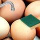 laver des oeufs 80x80 - Alimentation pour les poules pondeuses : que mangent-elles ?