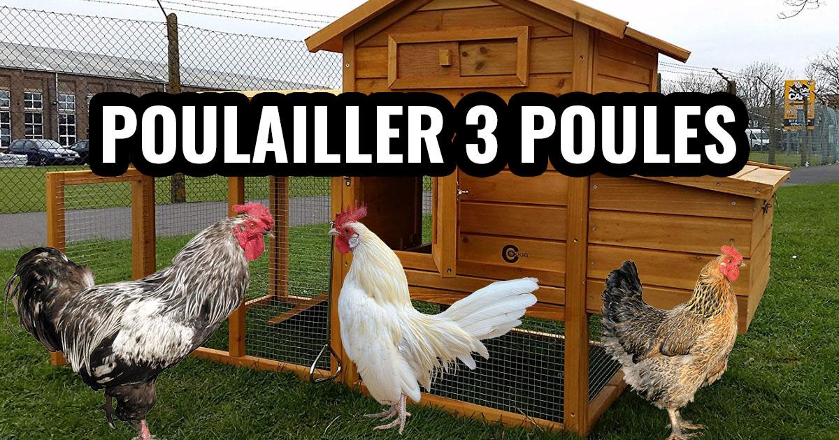 poulailler 3 poules