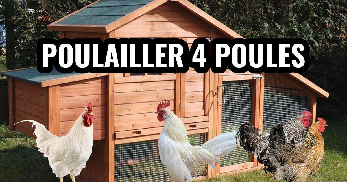 Poulailler pour 4 poules