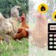 combien de poules 80x80 - Vermifuge naturel pour les poules : recette