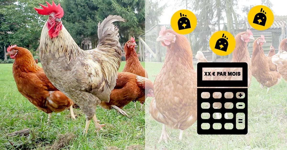 combien de poules