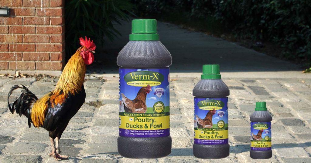 des vermifuges poule 1024x538 - Vermifuger les poules