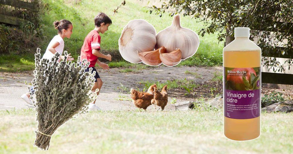 ingredients naturels 1024x538 - Vermifuger les poules