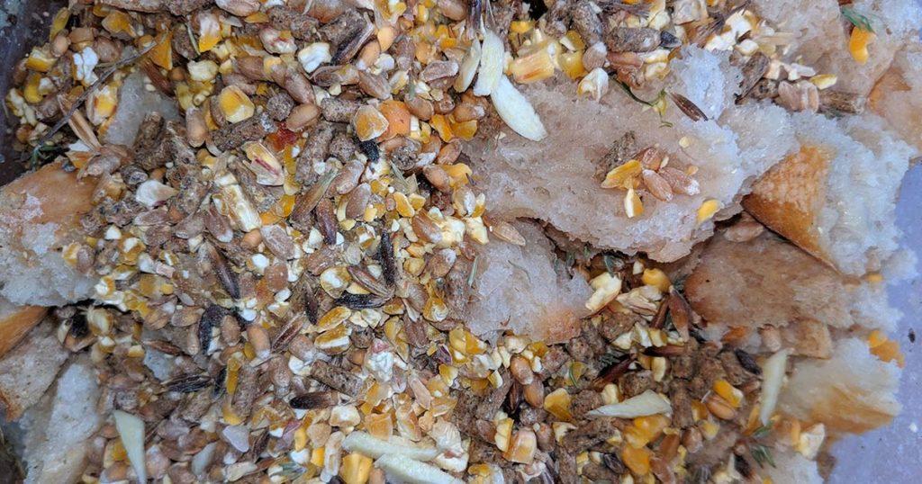 patte vermifuge 1024x538 - Vermifuge naturel pour les poules : recette