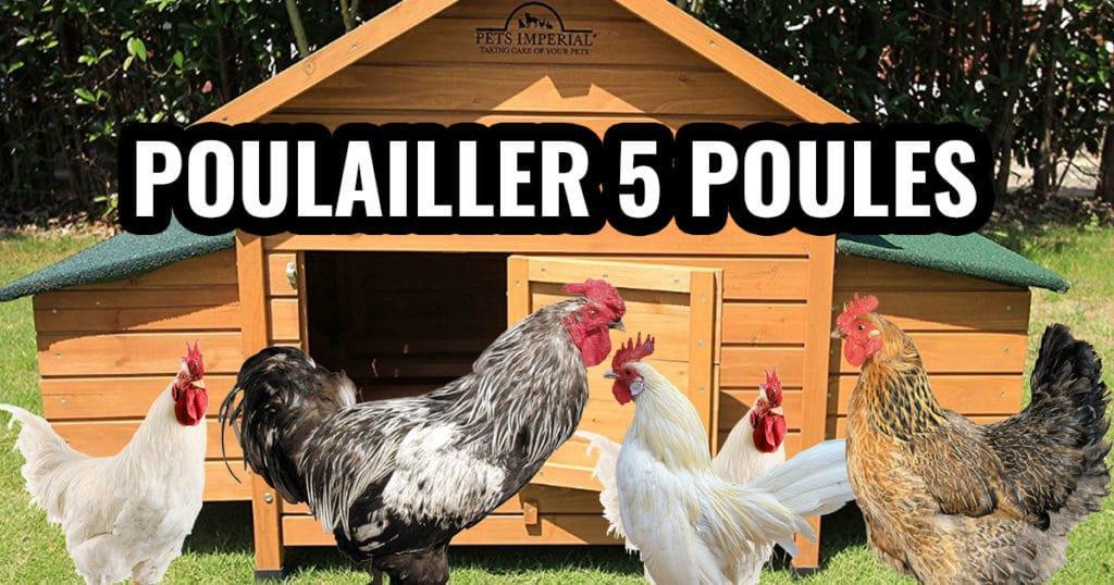 poulailler 5 poules