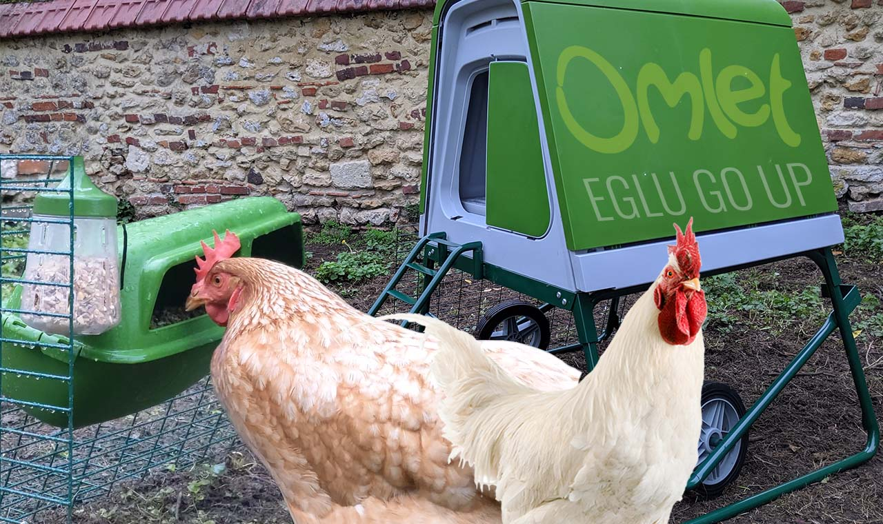 eglu go up omlet - Comment protéger ses poules en plein hiver ?
