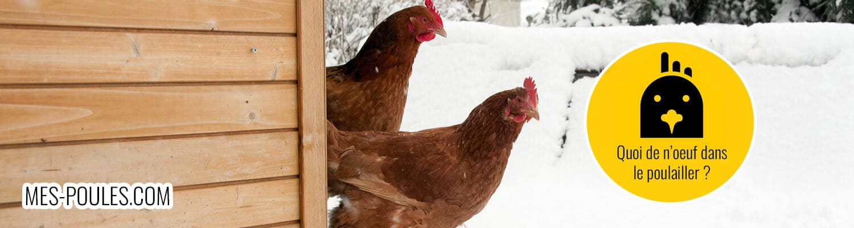 Mes poules : astuces pour votre poulailler !