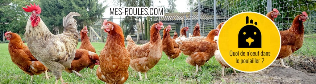 mes poules img 2 1