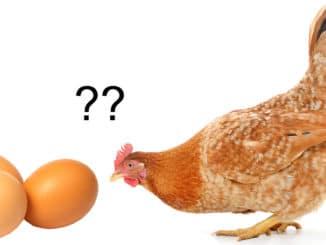 oeuf ou poule 326x245 - L'oeuf ou la poule : qui est le premier ?