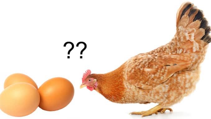 oeuf ou poule 678x381 - L'oeuf ou la poule : qui est le premier ?