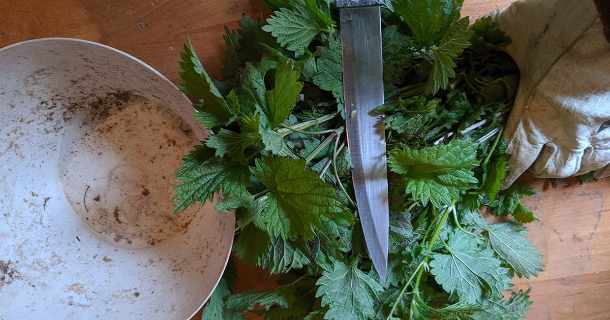 Légume-feuille - Herbe