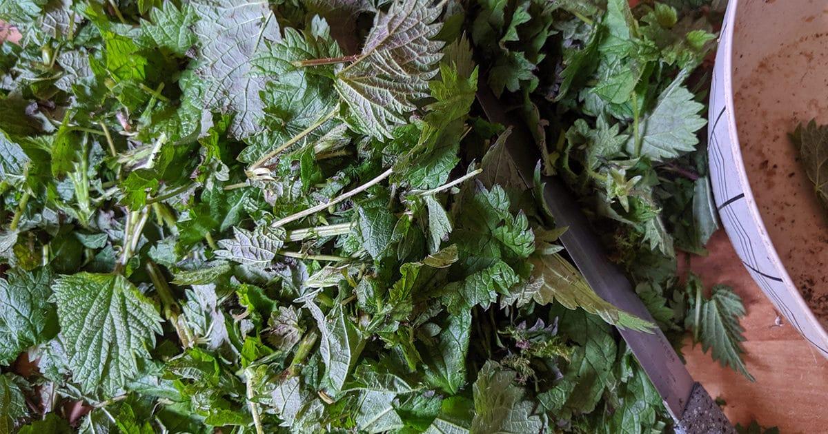 Légume-feuille - Legumes de printemps